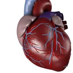 heartsurgeon